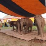 近所に象がやってきた!
