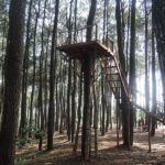 ピヌスの森で森林浴