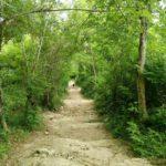 アバン遺跡までの道